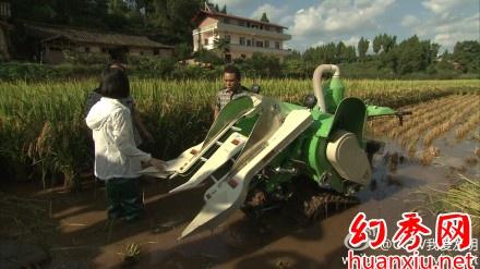微型水稻收割机