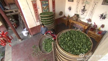 福发明茶叶挑梗机器