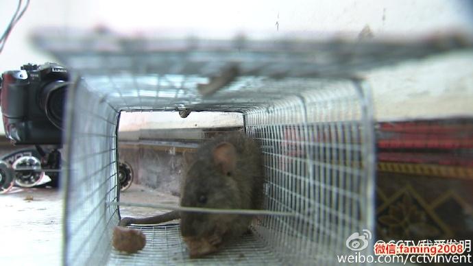 我爱发明捕鼠笼
