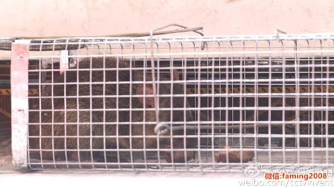 我爱发明请鼠入笼