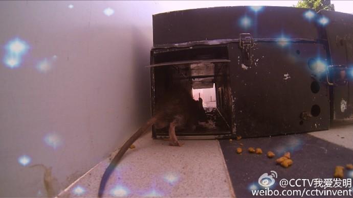 我爱发明捕鼠特工