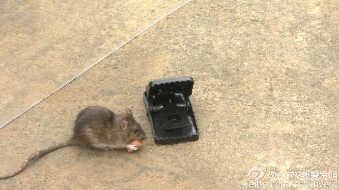 我爱发明鼠进无出