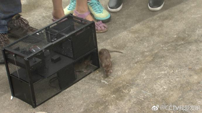 我爱发明 红外热感应捕鼠器