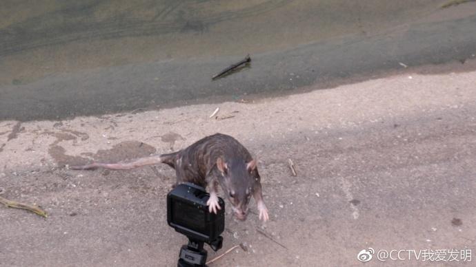 我爱发明连克鼠敌